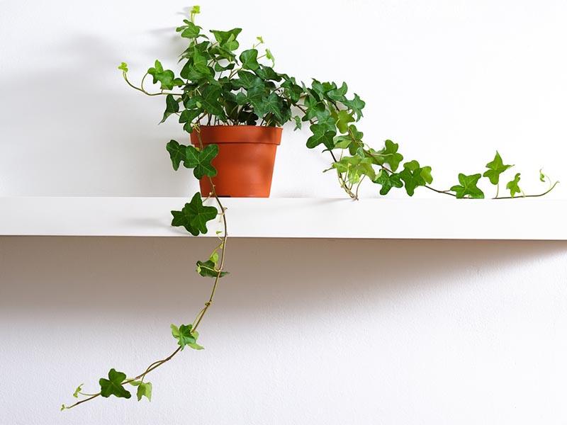 10 plantas de interior para decorar tu hogar en primavera